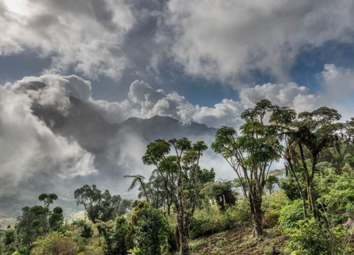 Guiné-Bissau: A Floresta está ameaçada