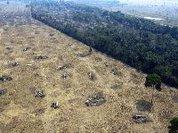 Recuperar a terra, nosso alimento e nossa agricultura
