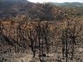 Portugal: PEV sobre os fogos florestais