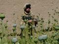 """Morte à América!"""" Fúria no Massacre da OTAN em Kandahar"""