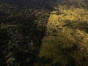 Governo brasileiro suspende operações contra desflorestação e queimadas