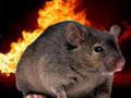 Rato que queimou a casa inteira, e outras histórias curiosas da vida dos animais