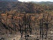 PEV: Alimentação dos Operacionais durante o combate a incêndios florestais