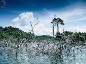 Se Cabral tivesse chegado pelo rio Xingu, o barco teria encalhado