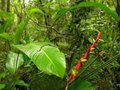 Março: Relatório sobre biomas brasileiros