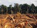 Jogo de cena das empresas e bancos em relação ao desmatamento