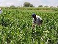 CNA promove debate sobre importância da agricultura familiar