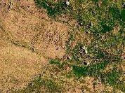 Os Verdes chocados com novo abate de árvores em Almeirim