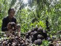 Empreendedorismo sustentável WaiWai: um belo exemplo