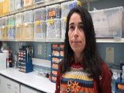 Investigadores avaliam os efeitos de pesticidas agrícolas nos organismos marinhos