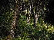 Incêndios fazem Cristas esquecer os cortes que impôs na floresta