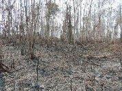 Em nota Cimi do Acre exige apuração de incêndio criminoso em terra do povo Huni Kuin