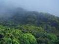 Brasil: Florestas a Desapacererem