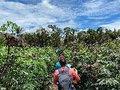 Xingu: Enquanto 320 doses vão para o lixo, governo negou vacina a indígenas na cidade