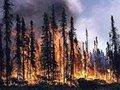 Medvedev avisa: Não pode haver crise de incêndios florestais