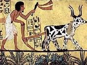 Sobre a Política Agrícola Comum após 2020 e a necessidade de defender a agricultura portuguesa