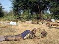 União Africana dividida por guerra na Somália