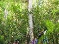 Estamos lutando pelo mesmo sonho: fazer florestas