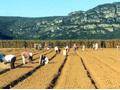 Brasil: Feira de Agricultura Familiar mostra força do setor