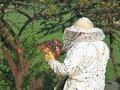 Celuloses estão a contaminar o pólen, denunciam os apicultores do Caramulo