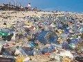 Dia Nacional do Mar - Os Verdes Propõem Incentivos aos Pescadores para Retirada de Plástico do Mar