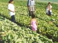 Brasil: Levantamento Sistemático da Produção Agrícola