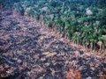 Assassinato na Amazônia
