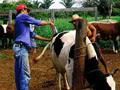Brasil: Estatísticas de pecuária saudáveis