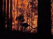 Quase 500 milhões de animais atingidos por incêndios na Austrália