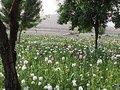 Império apaixonado por seu cemitério afegão