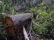 Podemos salvar a Amazônia