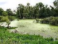 Distritos de Coimbra e Aveiro - Os Verdes abordaram problemáticas Ambientais das Zonas Húmidas