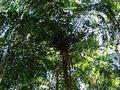Os Verdes exigem esclarecimentos sobre o abate e transplante de árvores junto à Torre de Picoas