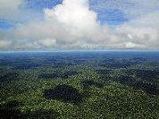 Amazónia em risco com a «MP da grilagem» de Bolsonaro