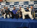 Campeões mundiais participam, em Salvador, de evento para os pets