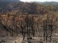 Portugal: Mais de 1500 operacionais combatem quatro grandes fogos