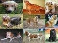 Aprovada proposta do PEV para condições dignas na Provedoria dos Animais