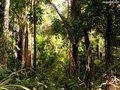 Brasil: Produção de madeira cresce mais do que a área de floresta plantada