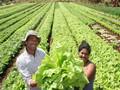 O que queremos para nossa agricultura