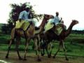 Darfur: Negociações prosseguem