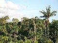 Estrela da Floresta começa actividades florestais em Ango