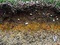 Debate de Actualidade sobre os Solos Contaminados nas Obras de Ampliação da Fundação Champalimaud em Pedrouços