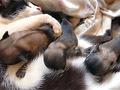 Ciência confirma que filhotes de Mimi são cachorros