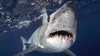 O fotógrafo Sam Cahir registrou o exato momento em que um tubarão-mako estava em posição de ataque. Oanimal marinho foi fotografado no Oceano Índico, próximo à ilha de Netuno, que fica na Austrália.