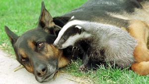 O cão é amigo não só para o homem. Fotos: Fotodom.ru/Rex Features