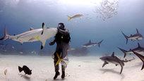 Especialista em tubarões Riccardo Sturla Avogadriutiliza uma técnica de hipnose que consiste em induzir um estado profundo de relaxamento. Para tanto, ele acaricia o focinho do tubarão até perceber que o animal se encontra em um estado praticamente inconsciente, uma espécie de transe. Fotos Fotodom.ru/Rex Features.