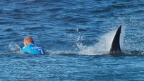 Atacado por tubarão ao ar livre