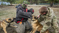 O Exército russo continua  treinar cães para serem utilizados numa querra. Documentos de arquivo contam a história do cão Rex, que sob bombardeio nadou pelo gélido rio Dnieper três vezes em um dia para entregar importantes documentos militares.Entre os que tiveram a honra de participar estava Dzhulbars, um cachorro que foi famoso na época. Nascido com a incrível habilidade de detectar explosivos com o seu olfato, Dzhulbars salvou tesouros arquitetônicos em Praga, Viena, Hungria e Romênia. O cão havia se ferido e proibido de participar do desfile, até que Stalin ordenou que Dzhulbars fosse carregado pela Praça Vermelha em seu próprio casaco.  Fotos Fotodom.ru/Rex Features.