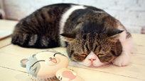 Cat café é lugare onde as pessoas relaxam, leem, tomam um cafezinho, mas o foco nesses locais são os gatos. Isso mesmo, você fará tudo o que se faz um café comum, e ainda poderá brincar, acariciar e receber lambeijos dos gatinhos do local. Purr Cat Café Club, Bangkok, Tailândia abriga 14 gatinhos persas, um pet shop e uma lojinha de roupas para felinos. Fotos ©Fotodom.ru/Rex Features